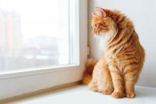 Породы кошек – как выбрать одну?