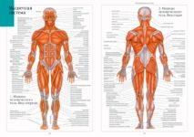 Анатомия человека: что нужно знать