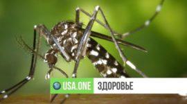 Американка умерла от чрезвычайно редкого вируса, который передается с укусом комара