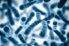 Хромосомный анализ в Киеве в Институте Генетики Репродукции