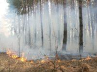 Эксперт ВОЗ рассказал, как может повлиять на здоровье дым от лесных пожаров
