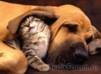 Кто вреднее - собаки или кошки?