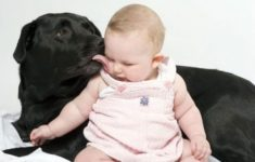 Маленькие дети понимают лай собак
