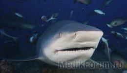 Мать спасла дочь из пасти акулы