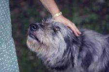 Парикмахеру из Огайо ампутировали руки и ноги после того, как ее облизала собака
