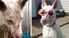 Собака, которая не может выйти на улицу без солнцезащитных очков, ищет себе любящую семью