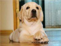 Собаки научились по запаху… находить рак!