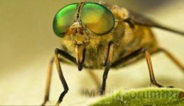 Укусы насекомых: скорая летняя помощь
