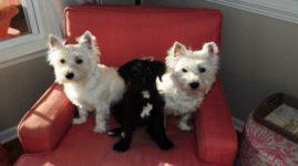 Владельцы 3 собак отвезли питомцев порезвиться к пруду. Все три погибли в течение нескольких часов