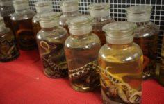 Женщину едва не убил укус маринованной змеи
